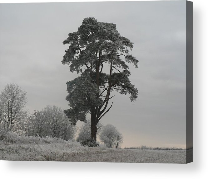 Tree Acrylic Print featuring the photograph Frosty Morning 2 by Lynne Iddon