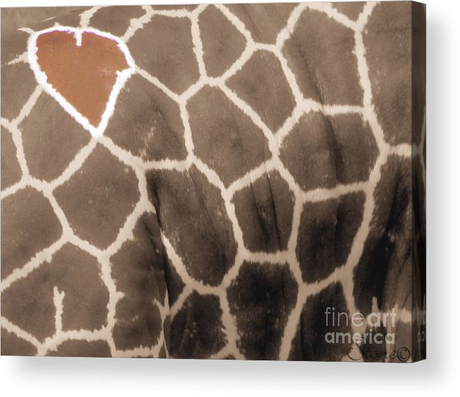 Grraffe Acrylic Print featuring the photograph Giraffe Love by September Stone
