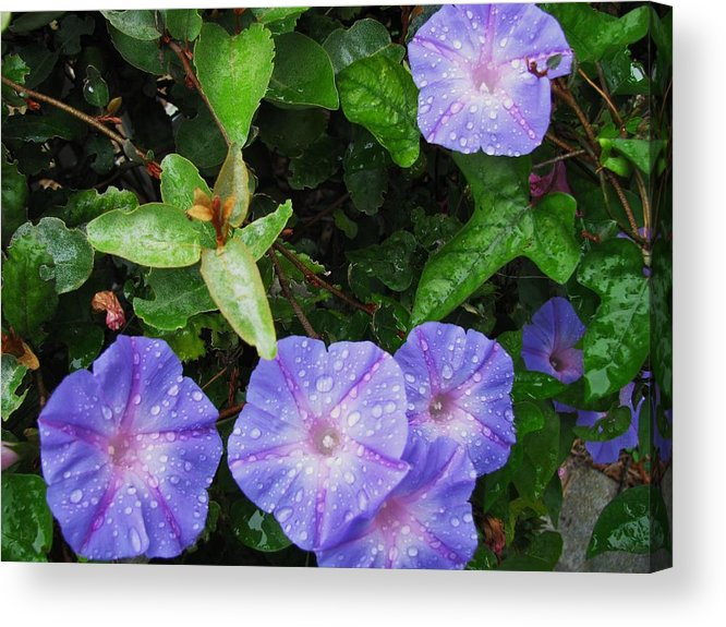 Flower Acrylic Print featuring the photograph Glorious Morning by Gloria Byler