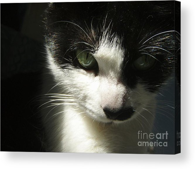 Cat Eyes Acrylic Print featuring the photograph Go Ahead Make My Day by Kristine Nora