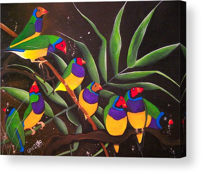 Gouldian Finch Acrylic Print featuring the painting Gouldian Finch Rainbow by Una Miller