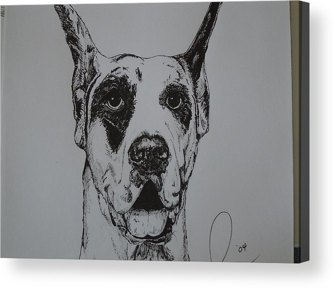 Dogs Acrylic Print featuring the drawing Great Dane by Raymond Nash