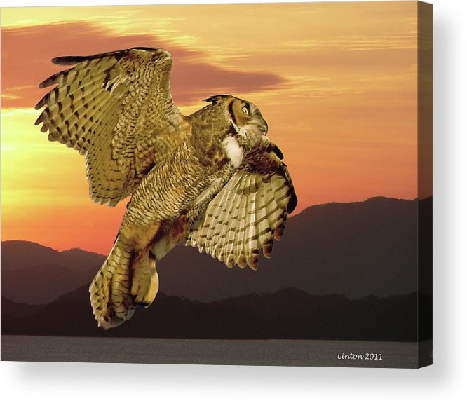 Great Horned Owl Acrylic Print featuring the photograph Great Horned Owl At Sunrise by Larry Linton