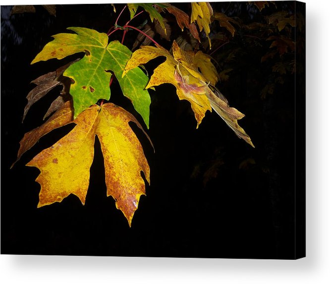 Autumn Acrylic Print featuring the photograph Green And Yellow by Ken Day