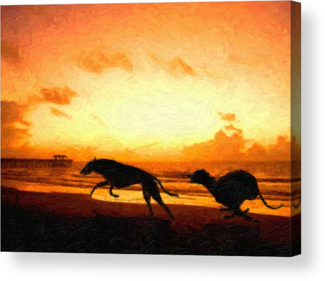 Greyhound Acrylic Print featuring the painting Greyhounds On Beach by Michael Tompsett