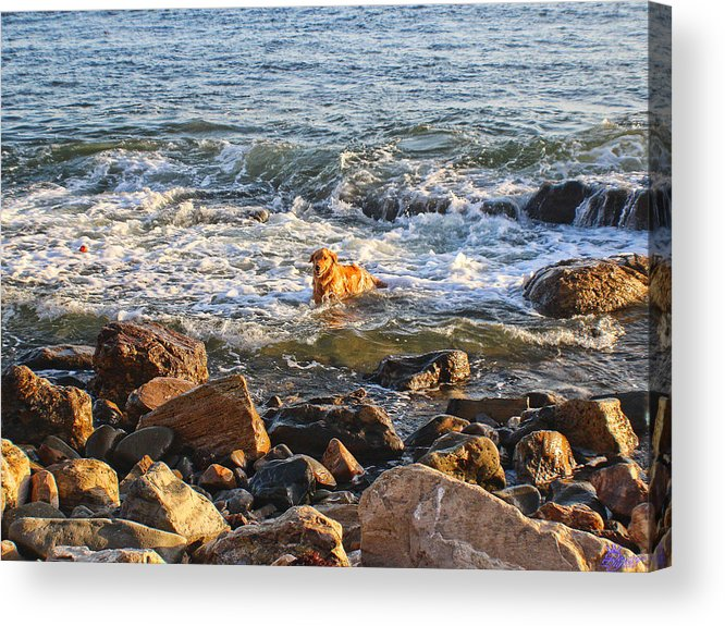 Acrylic Print featuring the photograph Happy Retreiver by Devin Digital