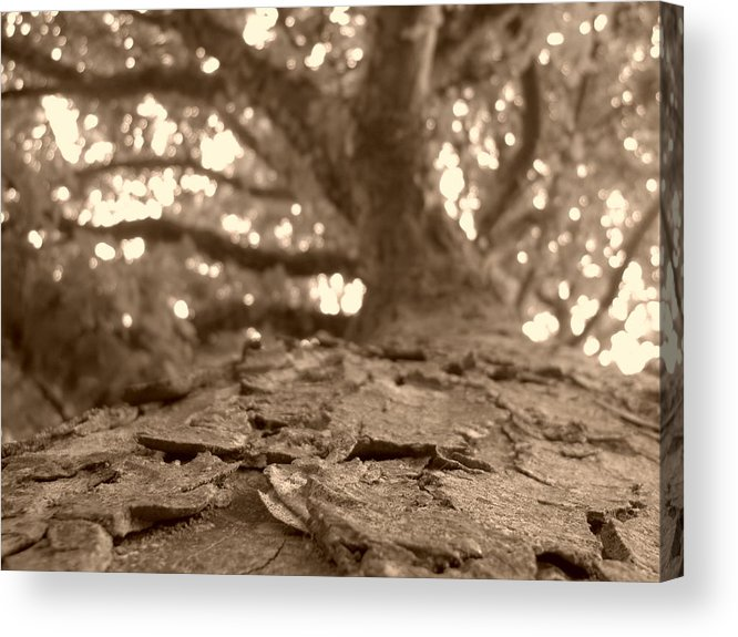 Tree Acrylic Print featuring the photograph Haptic Poetry by K J Nolan