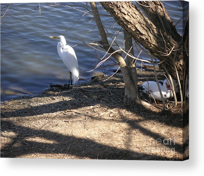Nature Acrylic Print featuring the photograph Hiding And Seeking by Lucyna A M Green