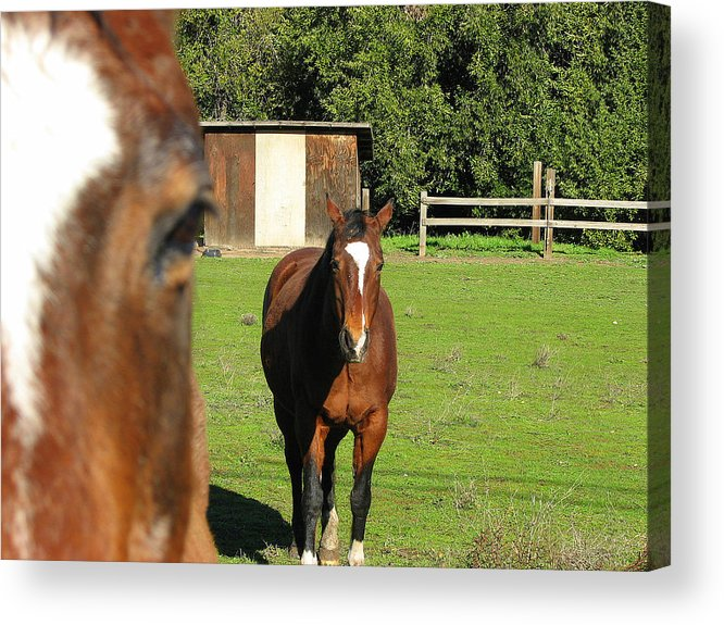 Horse Acrylic Print featuring the photograph Horses by Kathy Roncarati