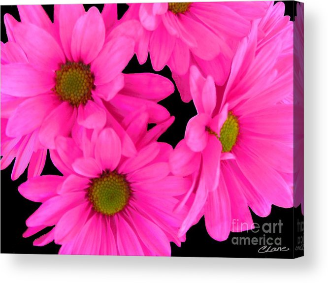 Flower Prints Acrylic Print featuring the digital art Hot Pink Flowers by Cindi Lane