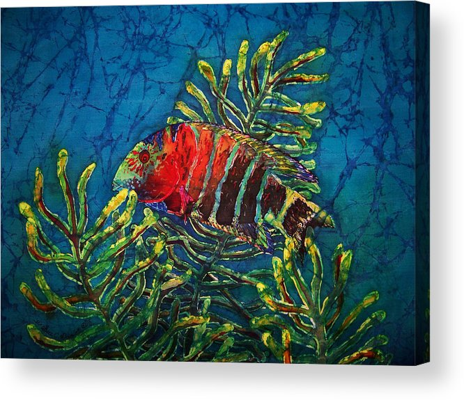 Fish Acrylic Print featuring the painting Hovering - Red Banded Wrasse by Sue Duda