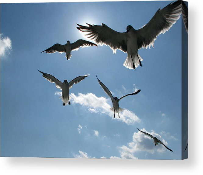 Sea Acrylic Print featuring the photograph In Formation by Dottie Dees
