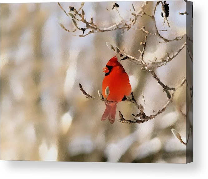 Cardinal Acrylic Print featuring the photograph In Red by Gaby Swanson