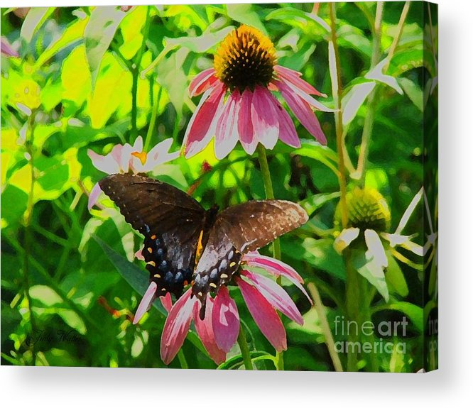 Butterfly Acrylic Print featuring the photograph In The Upper Garden - One by Judy Waller