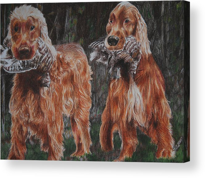 Dogs Acrylic Print featuring the drawing Irish Setters by Darcie Duranceau
