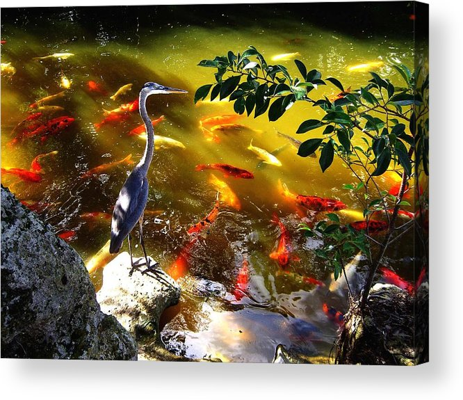 Bird Acrylic Print featuring the photograph Just Looking by Blima Efraim