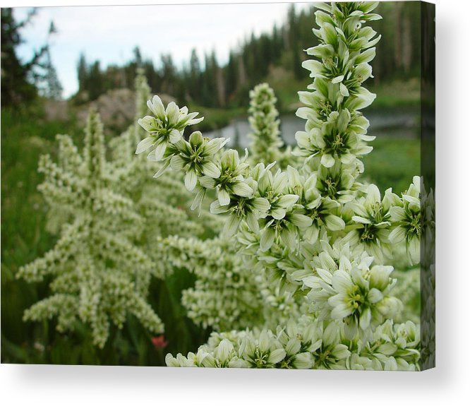 Flower Acrylic Print featuring the photograph Lake Catherine Bloom by Derek Nielsen