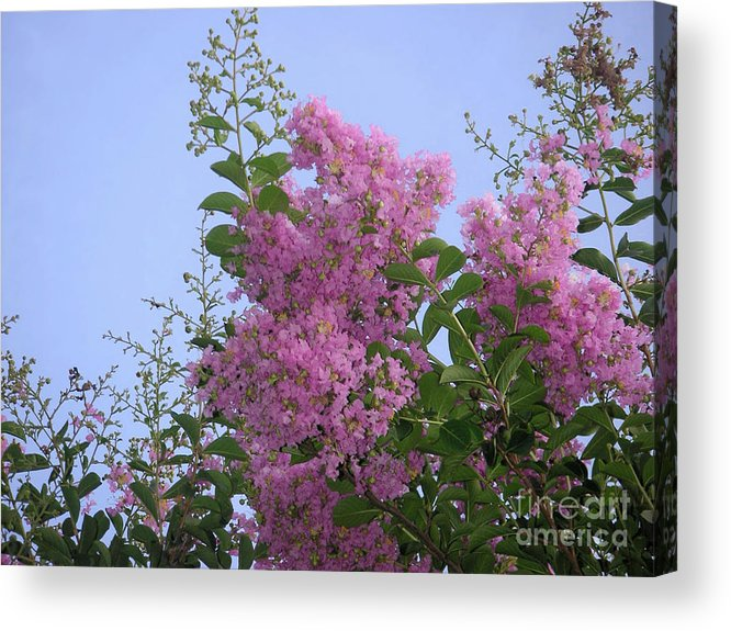 Nature Acrylic Print featuring the photograph Lavender Silhouettes by Lucyna A M Green