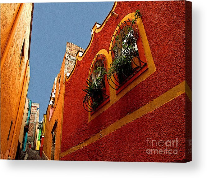 Darian Day Acrylic Print featuring the photograph Leafy Windows by Mexicolors Art Photography