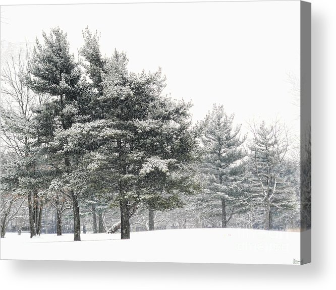 Trees Acrylic Print featuring the photograph Let It Snow by Jeff Breiman