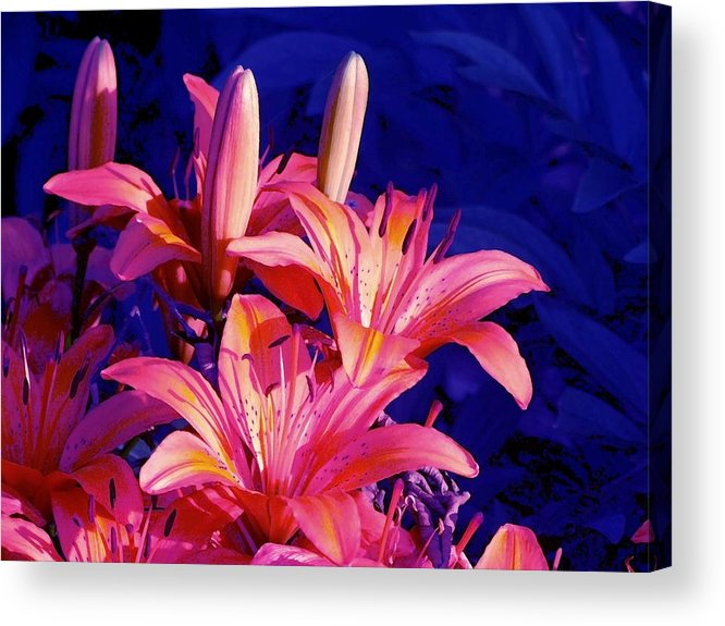 Lily Acrylic Print featuring the photograph Lillies In Blue by Jim Darnall