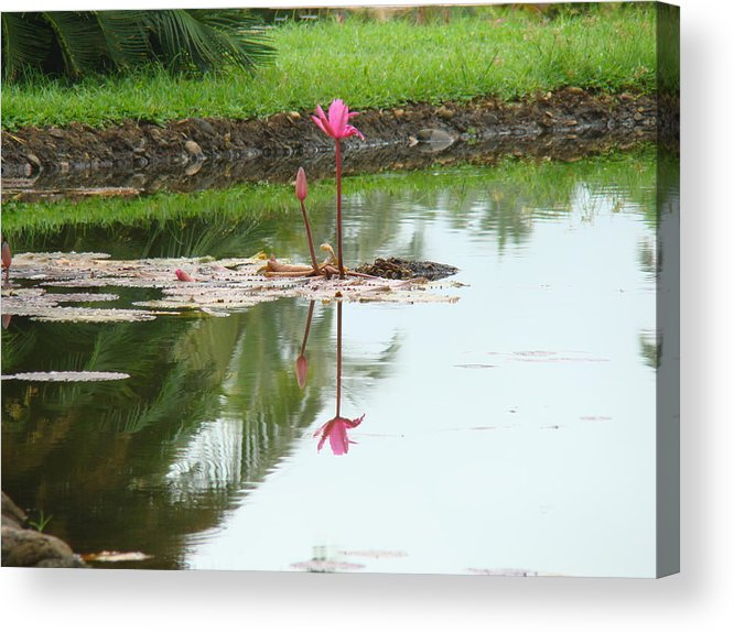 Landscape Acrylic Print featuring the photograph Lily-3 by Reshmi Shankar