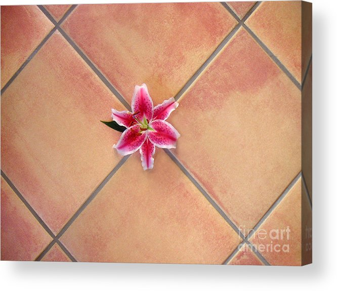 Nature Acrylic Print featuring the photograph Lily Alone On Tile by Lucyna A M Green
