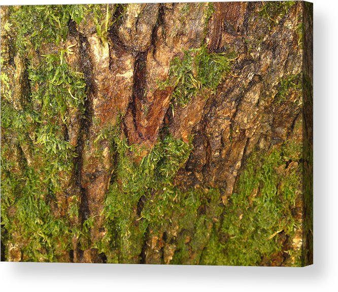 Tree Acrylic Print featuring the photograph Living On The Edge by DebiJeen Pencils