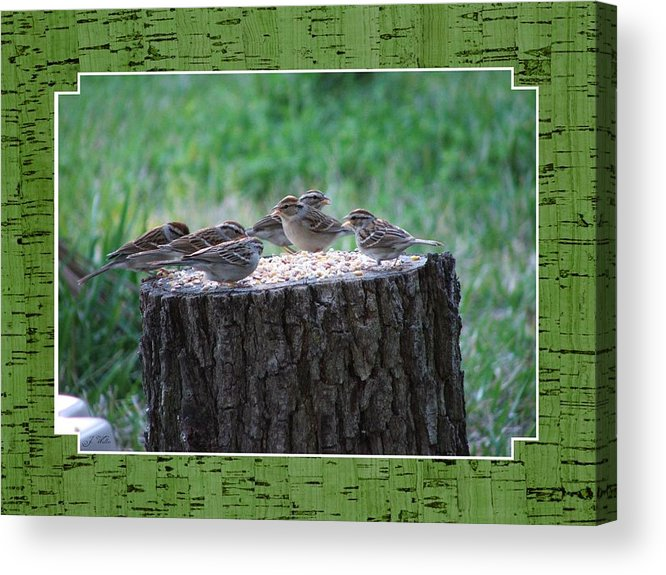 Wren's Acrylic Print featuring the photograph Lunch Time At The Tree Log Diner by Judy Waller