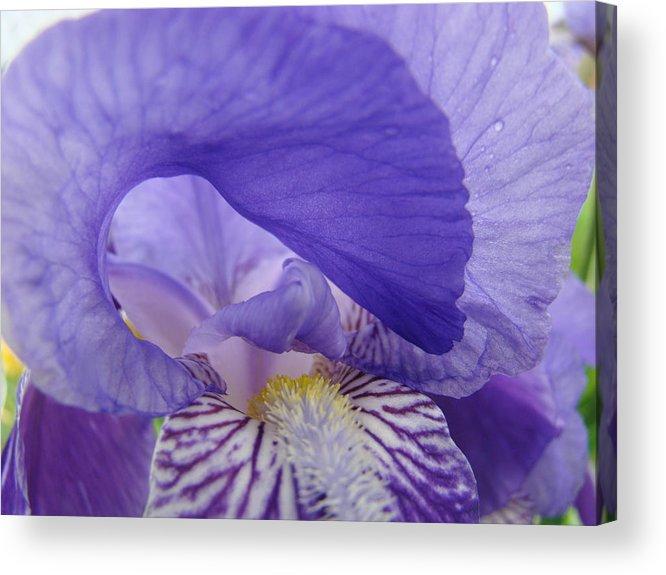 �irises Artwork� Acrylic Print featuring the photograph Macro Irises Close Up Purple Iris Flowers Giclee Art Prints Baslee Troutman by Baslee Troutman