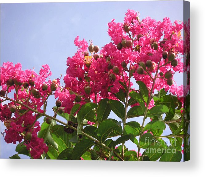 Nature Acrylic Print featuring the photograph Magenta Flames by Lucyna A M Green