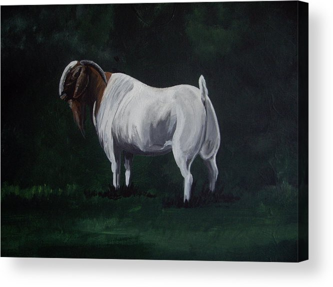 Goat Acrylic Print featuring the painting Majestic Boer Buck by Glenda Smith
