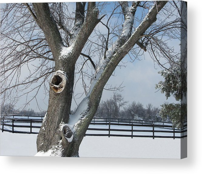 Winter Acrylic Print featuring the photograph Maple In Winter by Martie DAndrea