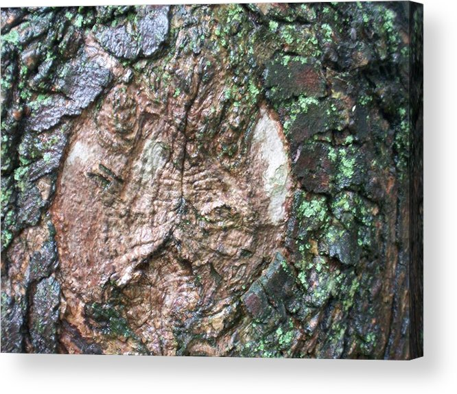 Nature Acrylic Print featuring the photograph Maple Tree In The Rain by Ellen B Pate