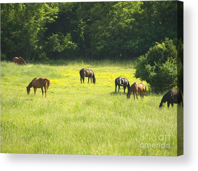 Mares Acrylic Print featuring the photograph Mares Afternoon by Kim