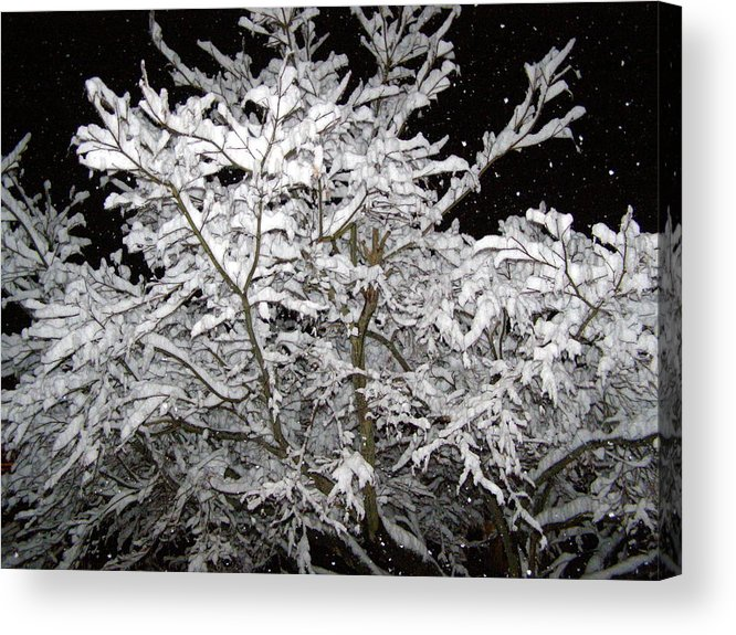 Winter Acrylic Print featuring the photograph Midnight Snow 3 by Christine Sullivan Cuozzo