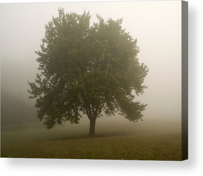 Tree Acrylic Print featuring the photograph Misty Morning Tree by Andrew Kazmierski