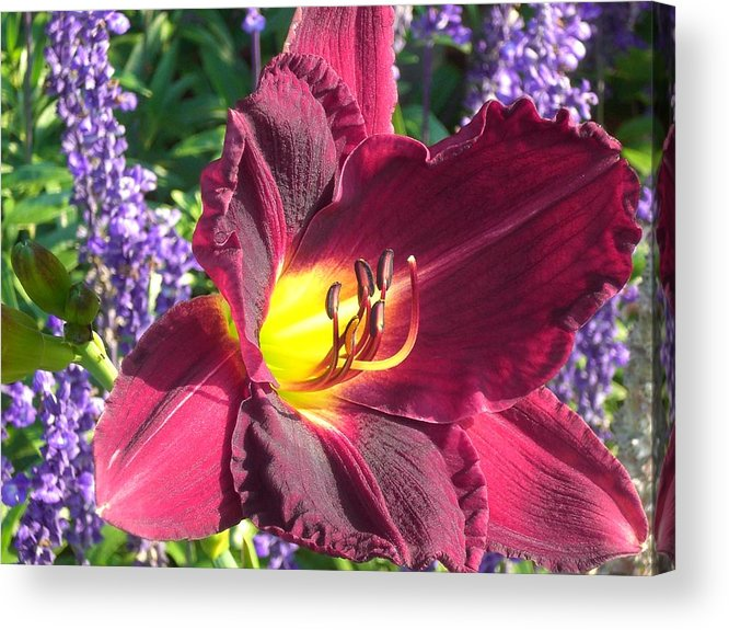 Lilly Acrylic Print featuring the photograph Mom's Lilly by Wendy Robertson