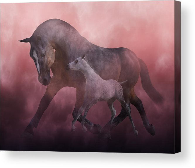 Horse Acrylic Print featuring the digital art Morning And Dawn by Betsy Knapp