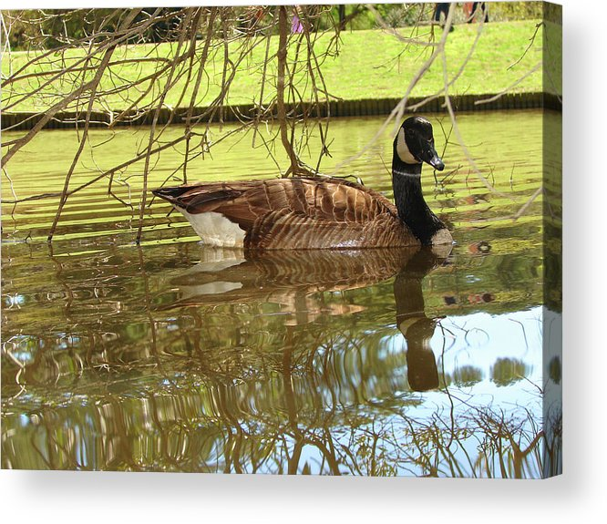 Goose Acrylic Print featuring the photograph Mother Goose by Laura Brightwood