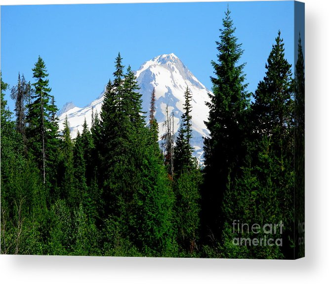 Mt. Hood Acrylic Print featuring the photograph Mount Hood Majestic by PJ Cloud