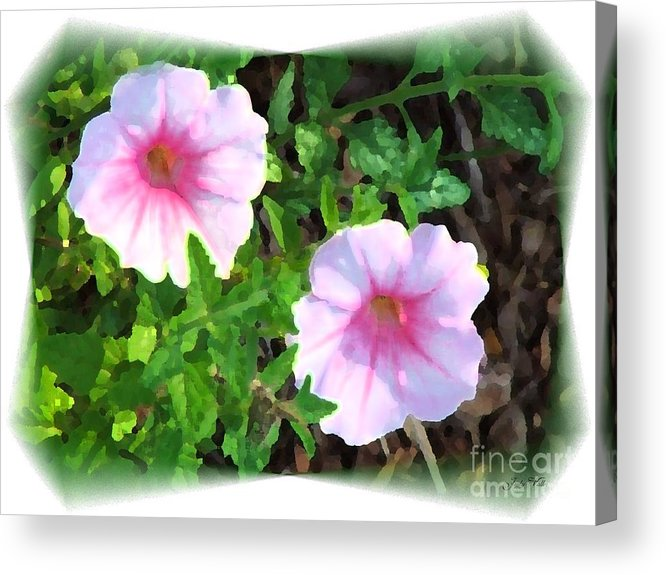 Muted Acrylic Print featuring the photograph Muted Colors by Judy Waller