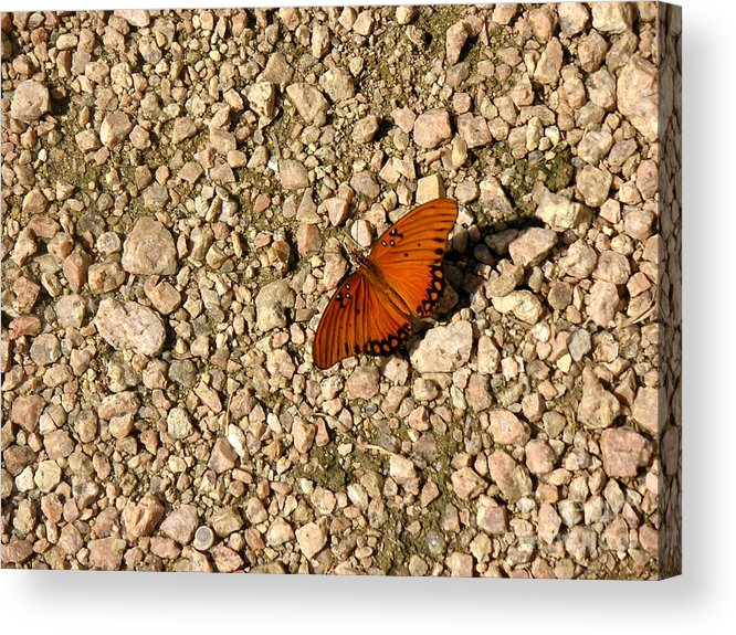 Nature Acrylic Print featuring the photograph Nature In The Wild - A Splash Of Color On The Rocks by Lucyna A M Green