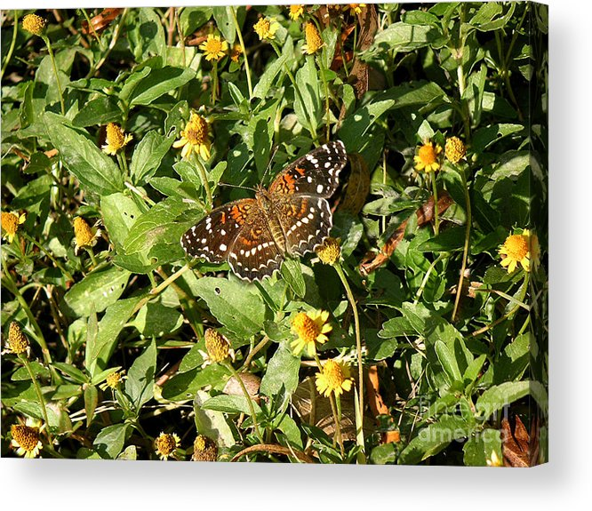 Nature Acrylic Print featuring the photograph Nature In The Wild - Colors Of Autumn by Lucyna A M Green