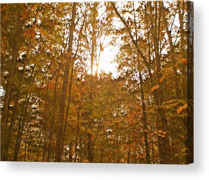 Woods Acrylic Print featuring the photograph North Carolina Woods by Cat Rondeau