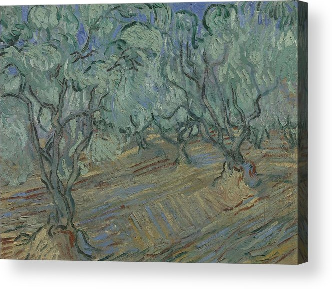 Art Acrylic Print featuring the painting Olive Grove Saint Remy De Provence June 1889 Vincent Van Gogh 1853 1890 by Artistic Panda