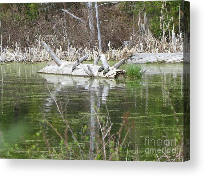 Turtle Acrylic Print featuring the photograph On The Pond by Juli House