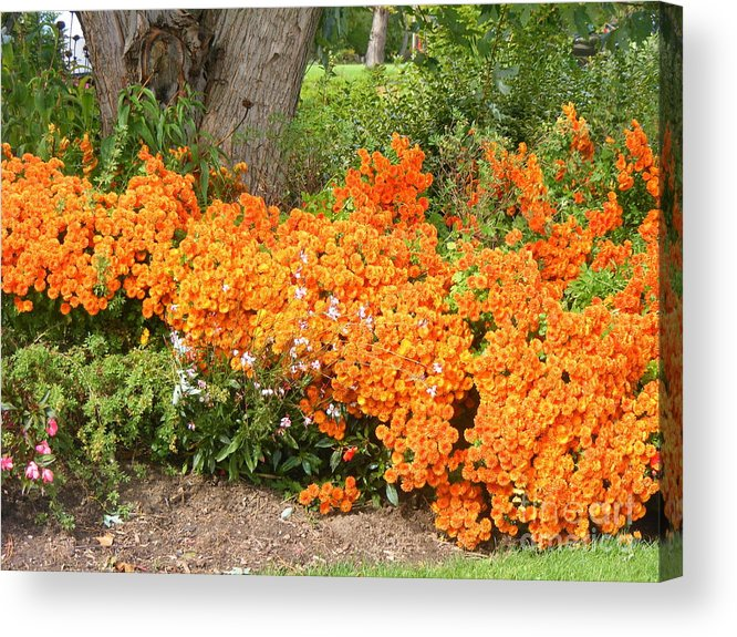 Flowers Acrylic Print featuring the photograph Orange Beauty by Deborah Selib-Haig DMacq