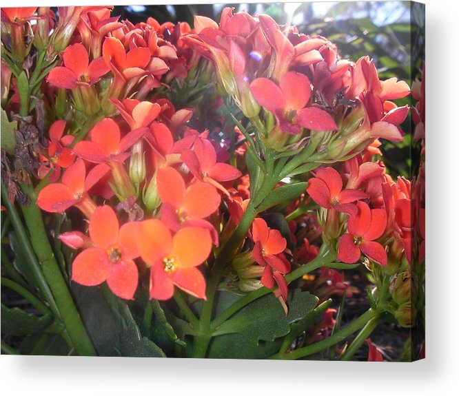 Flower Acrylic Print featuring the photograph Orange Delight by Neil Trapp