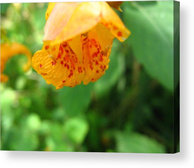 Flower Acrylic Print featuring the photograph Orange Flower by Melissa Parks